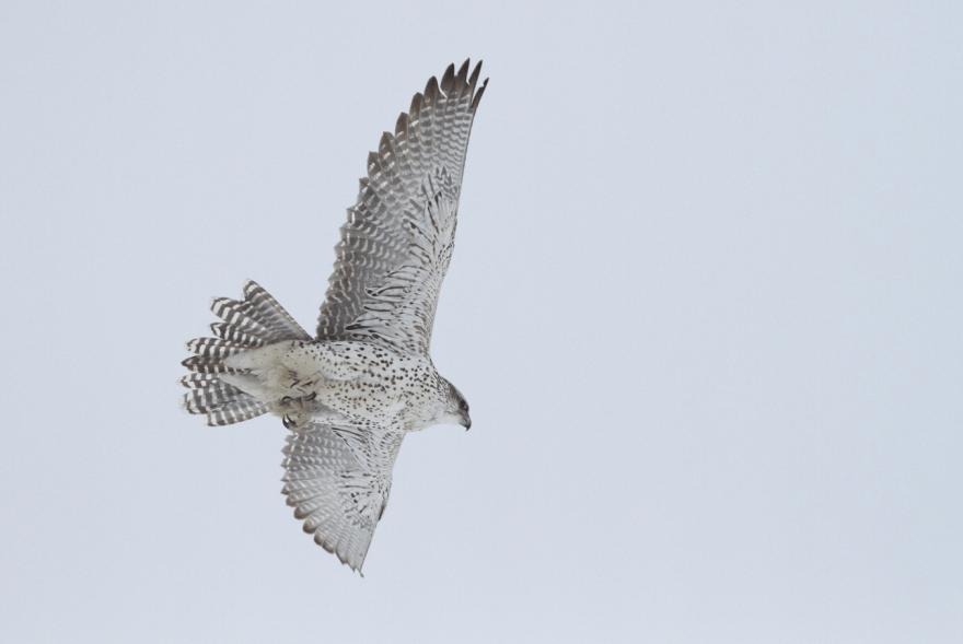 Northern Bowerbirds Lights