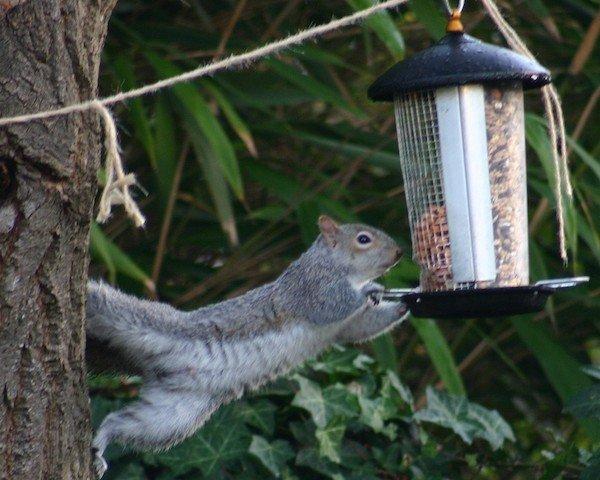 Slinky Squirrel Feeder Made