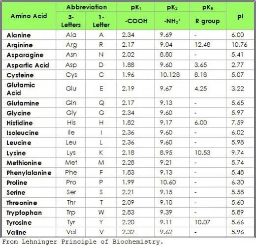 Acidic Amino Acids List