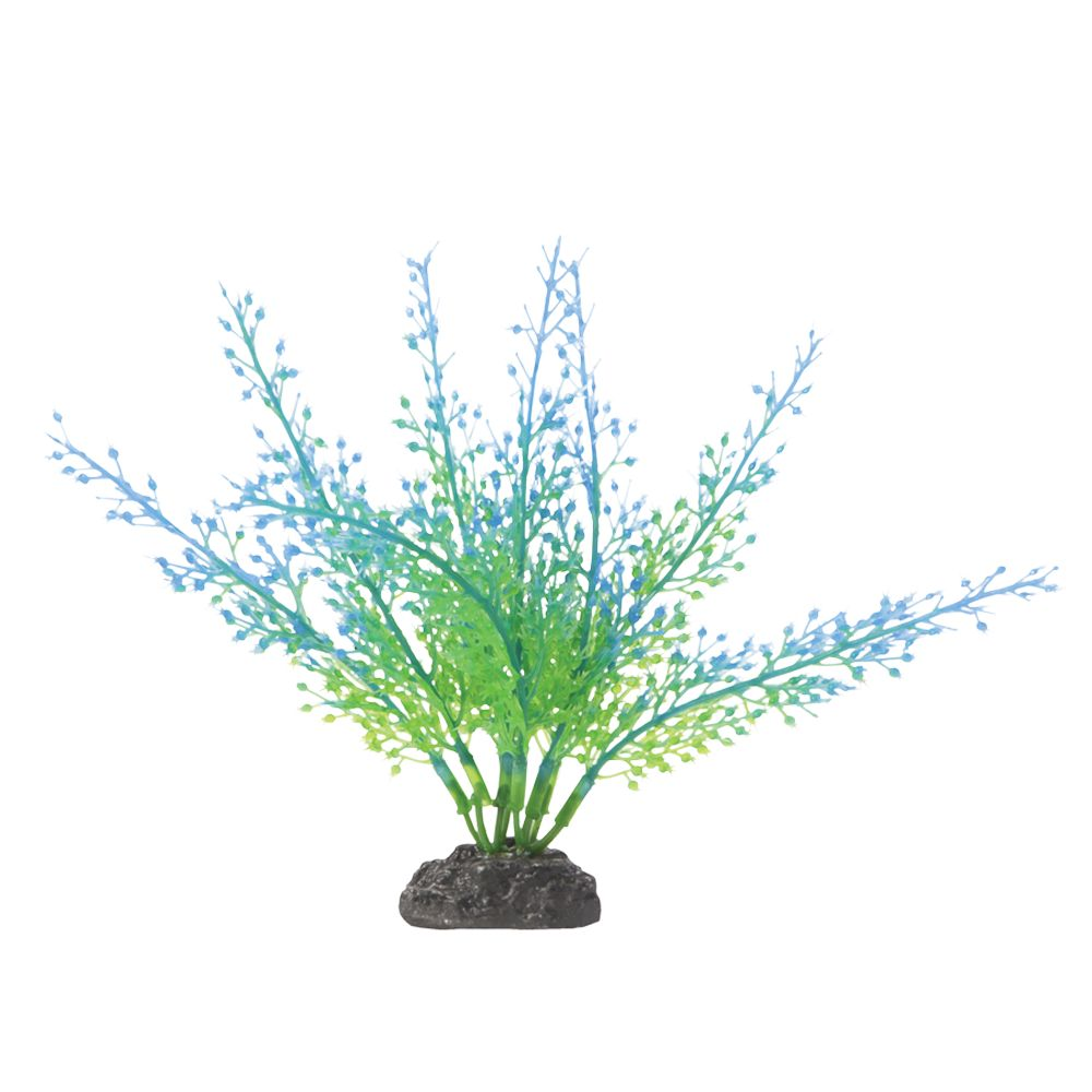 Aquarium Plants Online Purchase