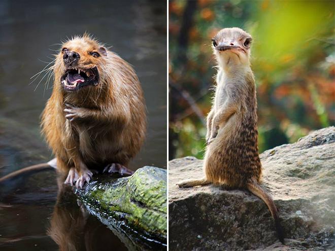 Animal Mashups By Sarah Deremer