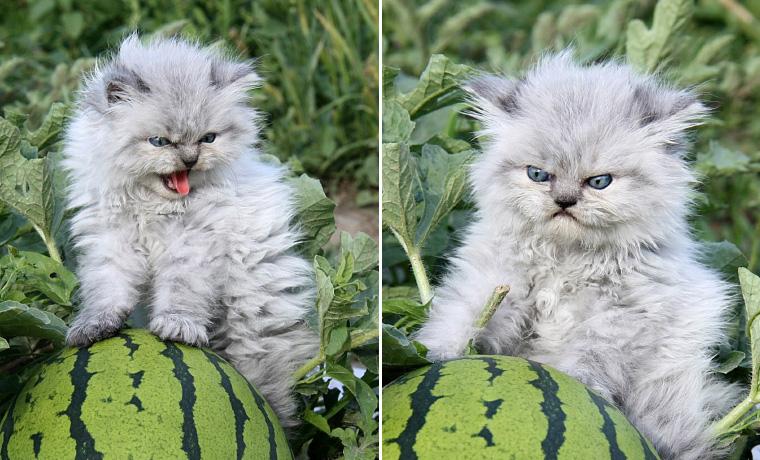 angry wet kitten - 760×460