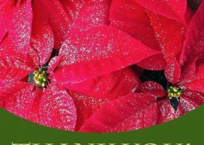 Thank_FB_404_poinsettias