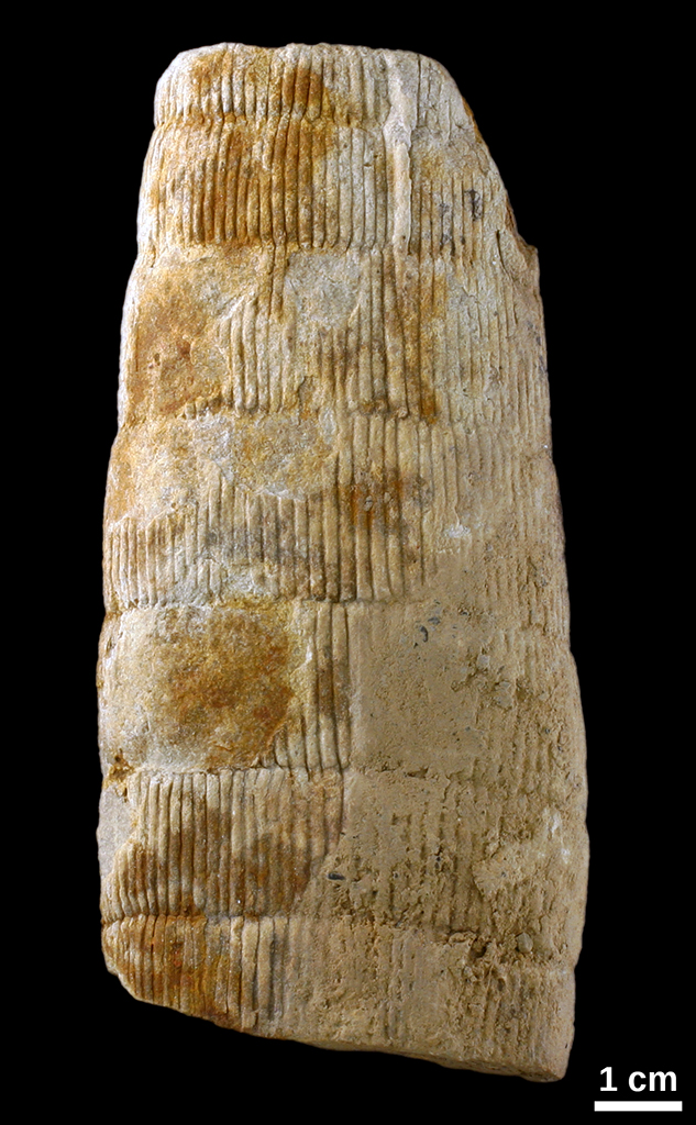 Found Oklahoma Fossils