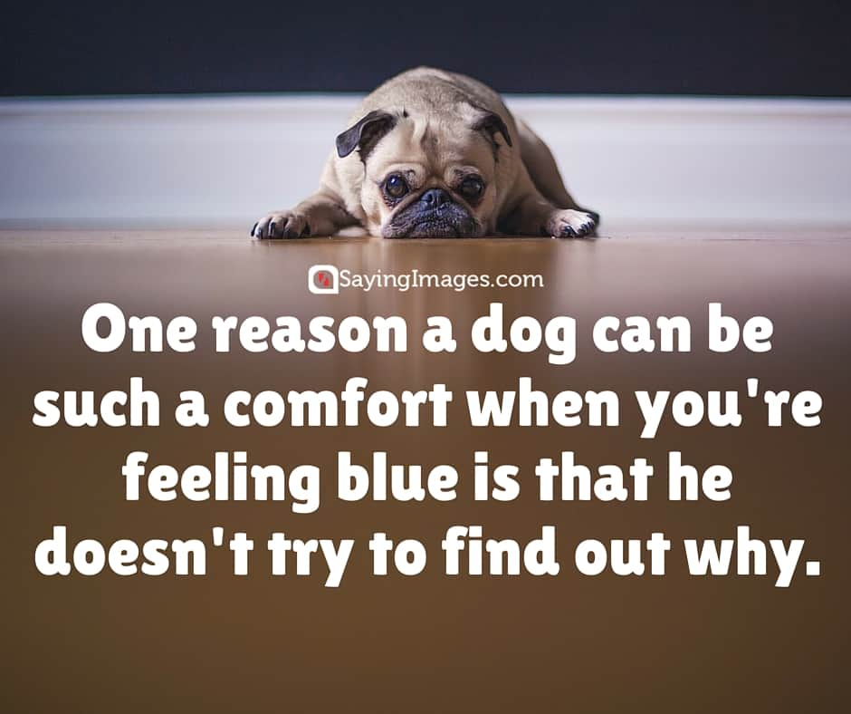Dog And Man Friendship Quotes