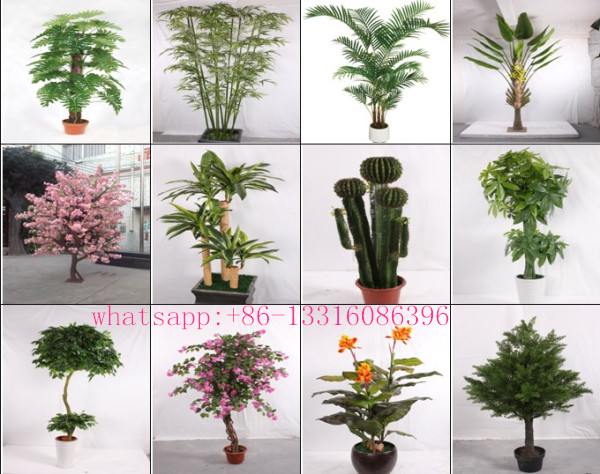 Different Indoor Plants