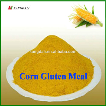 Corn Gluten Meal 60% For Poultry Food Supplement - Buy ...