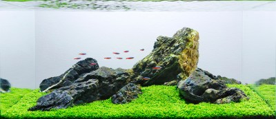 Aquascape Analysis of George Farmer's One-Pot Iwagumi ...