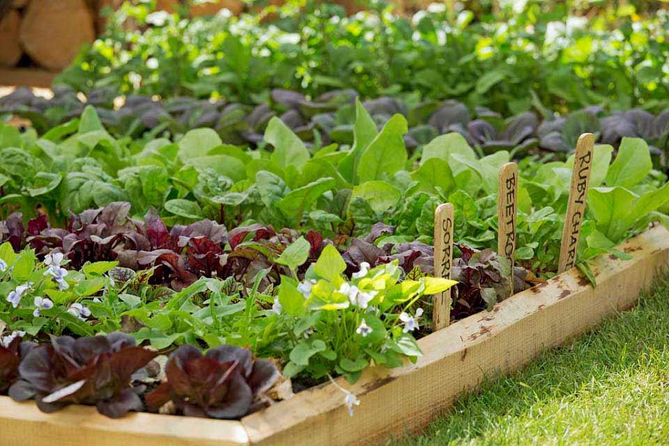 Vegetable Garden Box Size