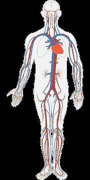 Pacific Medical Training - Circulatory System