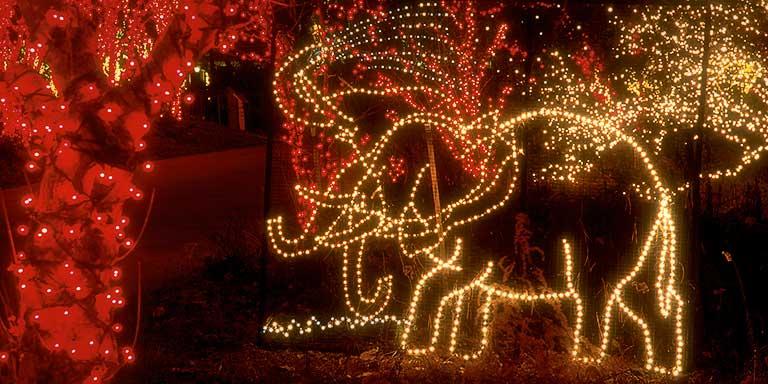 Riverbank Zoo Christmas Lights