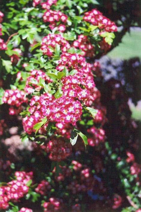 Garden Decor Clearance