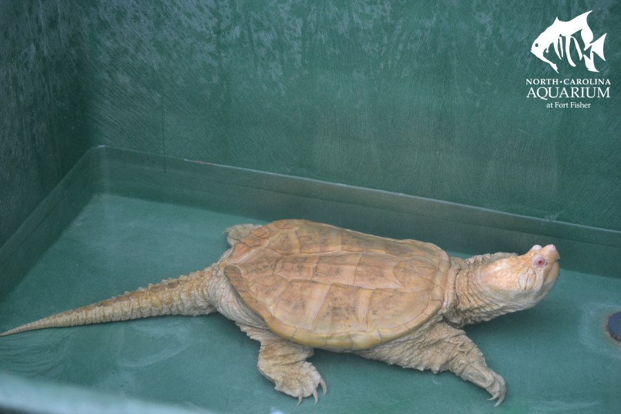 the green sea turtle information » [HD Images] Wallpaper For ...