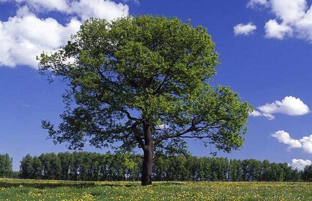 Can you name these common trees? - Telegraph