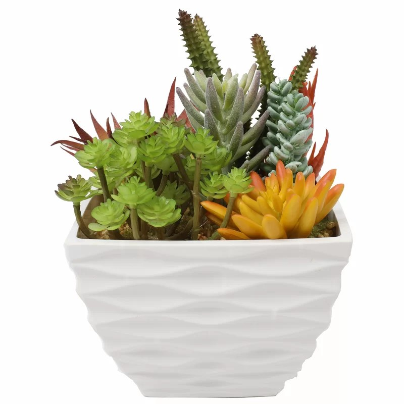 Decorative Succulents Gifts