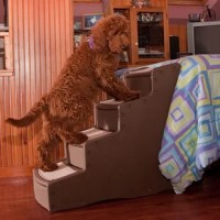 The Pet Gear Easy Step IV 4 Step Pet Stair makes a practical addition to homes with pets. This stair case for pets can help pets gain access to a couch, a chair, or a bed.   The Easy Step IV 4 Step Pet Stair by Pet Gear is made from high-quality plastic, which enables functionality and sturdiness for a long period of time. This carpeted staircase , which you can choose from according to your preference . The rise of the stairs is perfect for most pets. This staircase has a carpeted run that can...