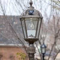 The Alcott Hill Rasberry Solar Powered 11-Light LED 87
