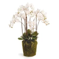 One Allium Way collection of floral drop-ins are the best on the market. So you can select the perfect vase, One Allium Way provide the root ball size for each drop-in.
