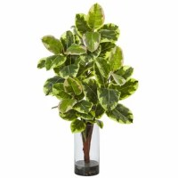 Thick foliage on a solid stem help makes this rubber plant lifelike, as does the faux water in the included glass cylinder vase. Made with the finest materials, this is truly an evergreen arrangement. Use it to make a statement or perfect first impression, such as on an entryway table or in an elegant office reception area.
