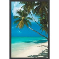 Escape to paradise with this inviting seascape. It is a color photo so vivid you can almost hear the tropical breeze in the palm tree leaves and feel your toes sinking into the warm, white sands.