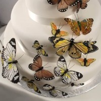 This beautiful Painted Butterfly Cake Topper product comes in carefully hand-picked assorted sizes and designs and in complementary colors so that you can create a wonderfully delicate fluttering effect on your wedding cake. Whether you're having a butterfly themed wedding or are giving your guests a butterfly wedding favors, these cake ornaments are the icing on the cake! The butterflies are set on the delicate wire for easy decorating. Each one is made from hand-painted feathers with...