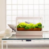 This light is an excellent gift, both for plant enthusiasts and epicures and kids who want to know about the process of plants growth! It's simulated sunlight with enough special wavelength which promotes photosynthesis for plants. High CRI 95+, 850lm high brightness light, and 4000K neutral white; not only highlights the bright colors and vitality of plants but also make your interior space more creative with her elegant appearance. Meanwhile, negative oxygen ions produced by plants improve...