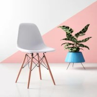 Showcasing an iconic Eiffel silhouette, this streamlined office chair brings a dash of mid-century modern flair as it offers a spot to sit in any space. Crafted from molded plastic, its scoop seat is founded atop four splayed beech wood legs in a natural stain for a hint of warmth. Crossed metal braces help this compact chair support up to 220 lbs., while foot glides below to protect your floors from scratching and scuffs. Assembly is required.