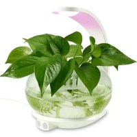 Perfect for indoor decoration. With this LED Indoor Garden Plant Grow Light, you can now grow your favorite plants inside your house without worrying about the weathers outside. This is the perfect decoration for your bedroom, kitchen and office or anywhere need a green plant.