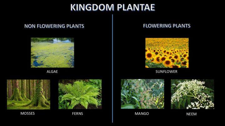 Non Flowering Plants Kids