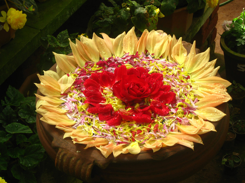Best Floating Flower Decorations Rangoli Designs Pooja Room This Month