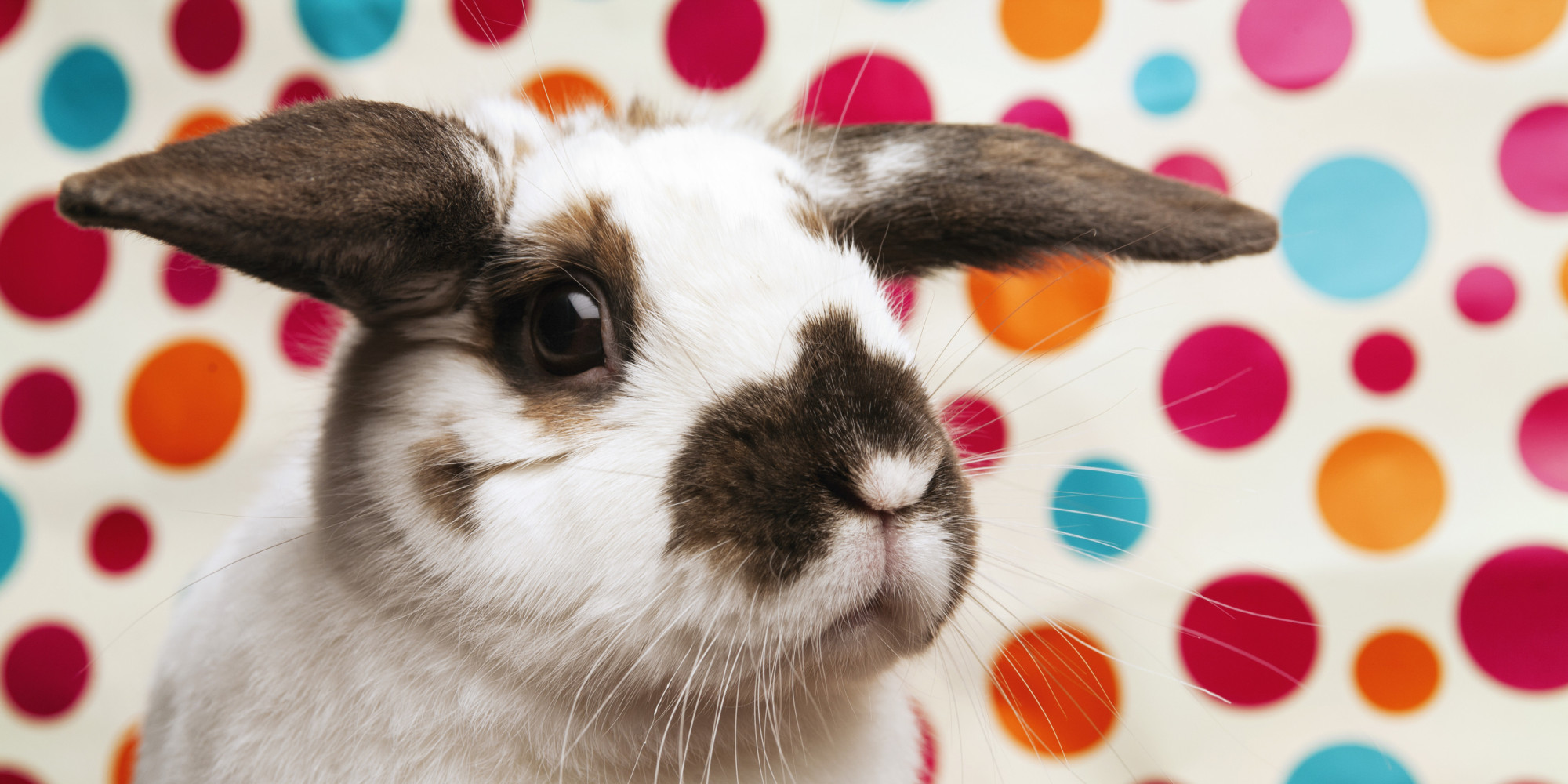 Best Decorations For Easter 8 Decor And Game Ideas For Adults This Month