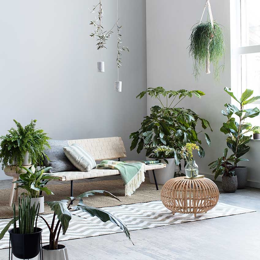 Best Solutions Houseplants Elle Decoration Uk This Month