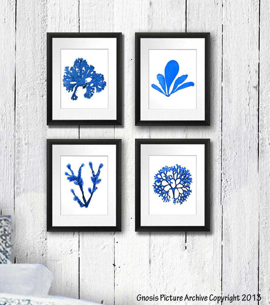 Best Set Of 4 Blue Seaweed Wall Art Print Nautical Beach Decor This Month