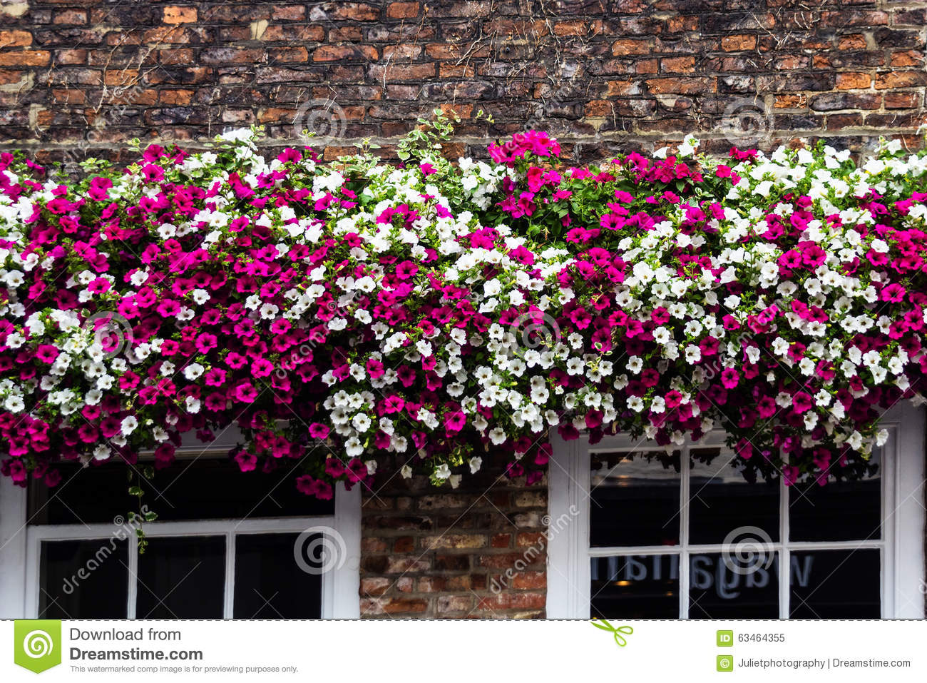 Best Beautiful Flower Decoration On The Old Building Stock This Month