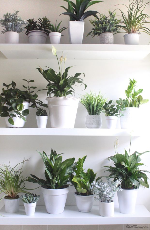 Best Plant Wall In The Bathroom House Mix Best Of The Blog This Month