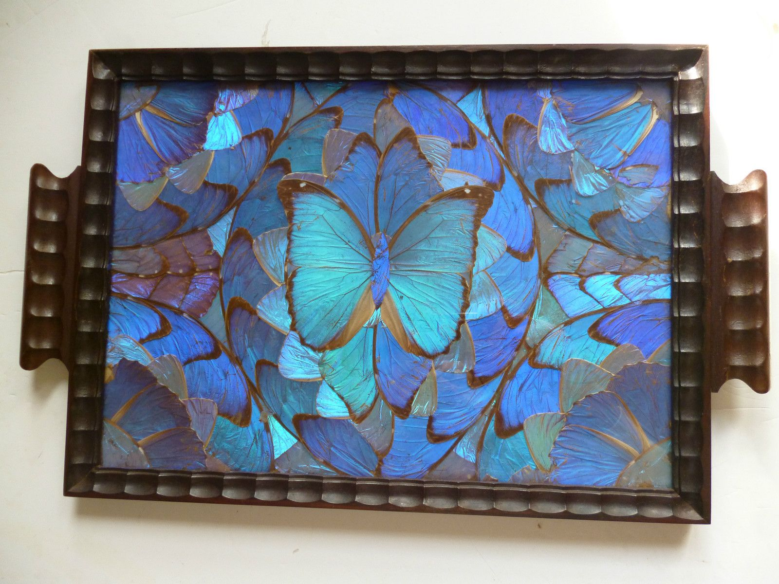 Best Antique Morpho Butterfly Wing Serving Tray Brazil Ebay This Month