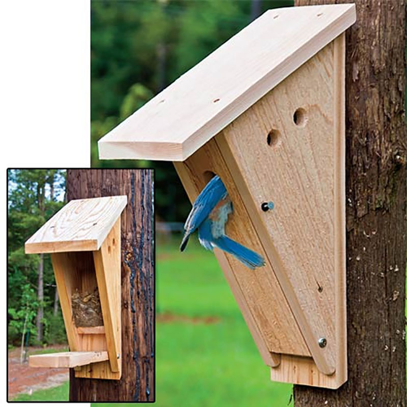 Best Peterson Bluebird Nest Box Gardens Alive This Month