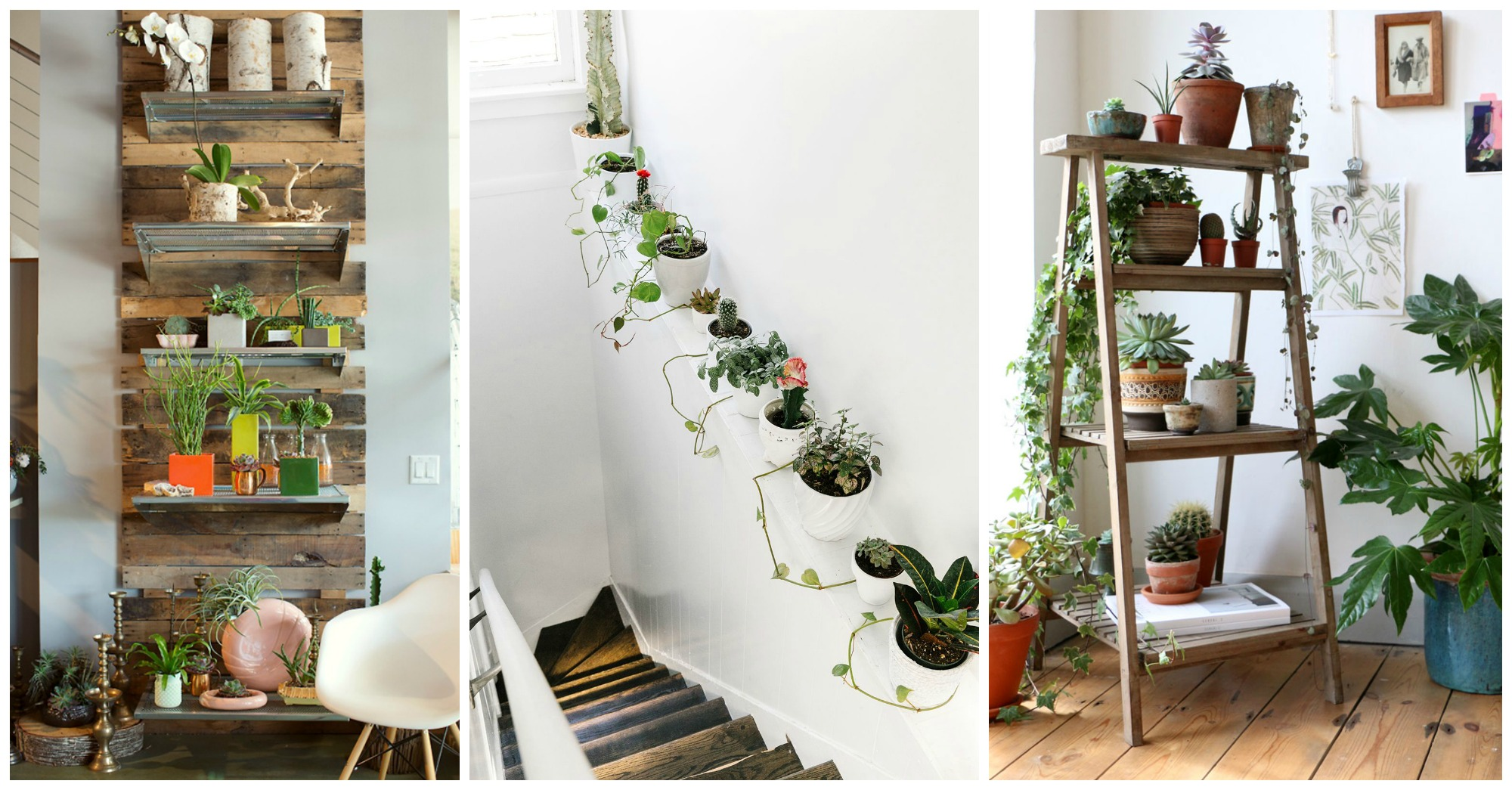 Best 10 Unexpected Ways To Decorate Your Home With Plants This Month