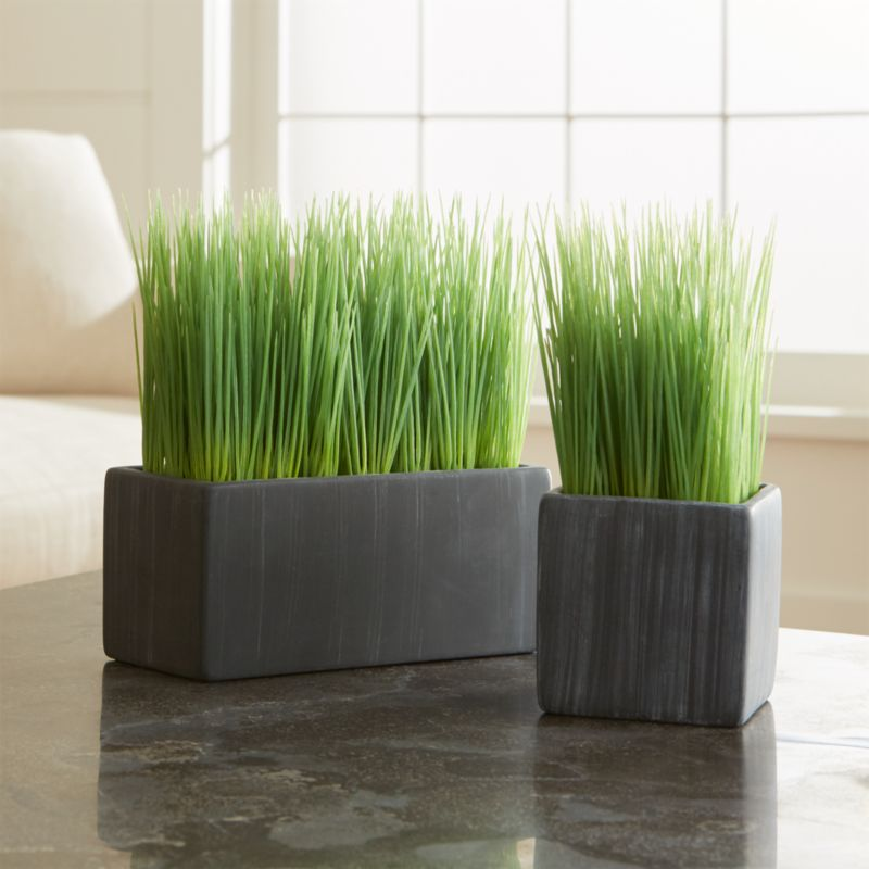 Best Potted Grasses Crate And Barrel This Month