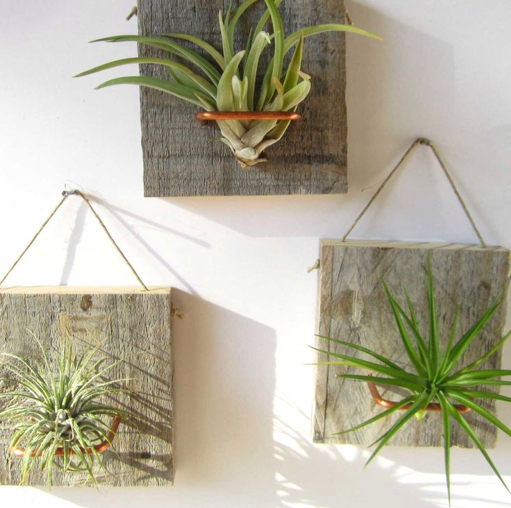 Best 25 Best Ideas About Hanging Air Plants On Pinterest Air This Month