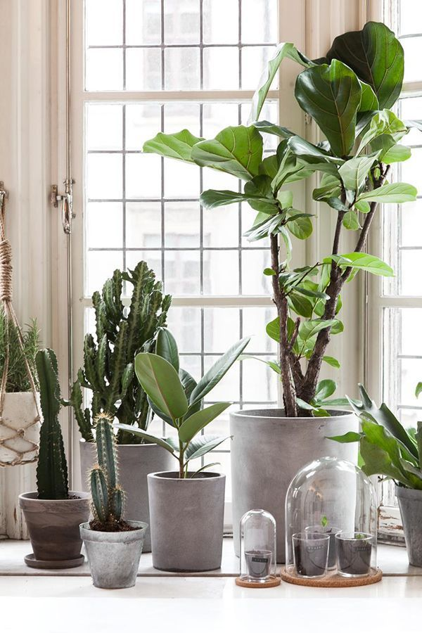 Best 20 Botanical Decor Ideas On Pinterest Candle This Month