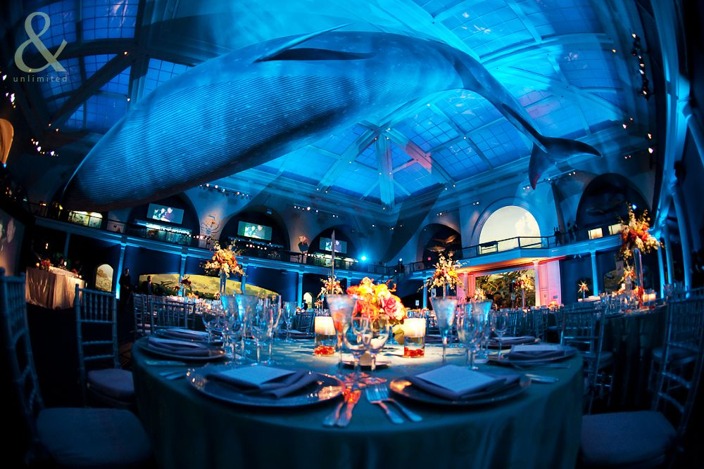 Best Under The Sea Prom Decorations Hall Of Ocean Life This Month