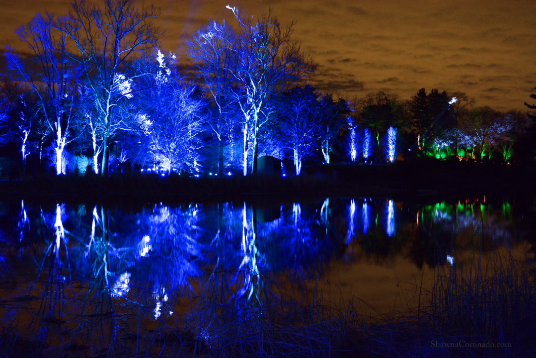 Morton Arboretum Lights