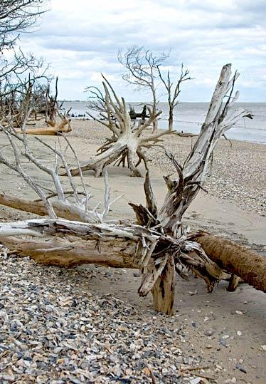 botany bay beach