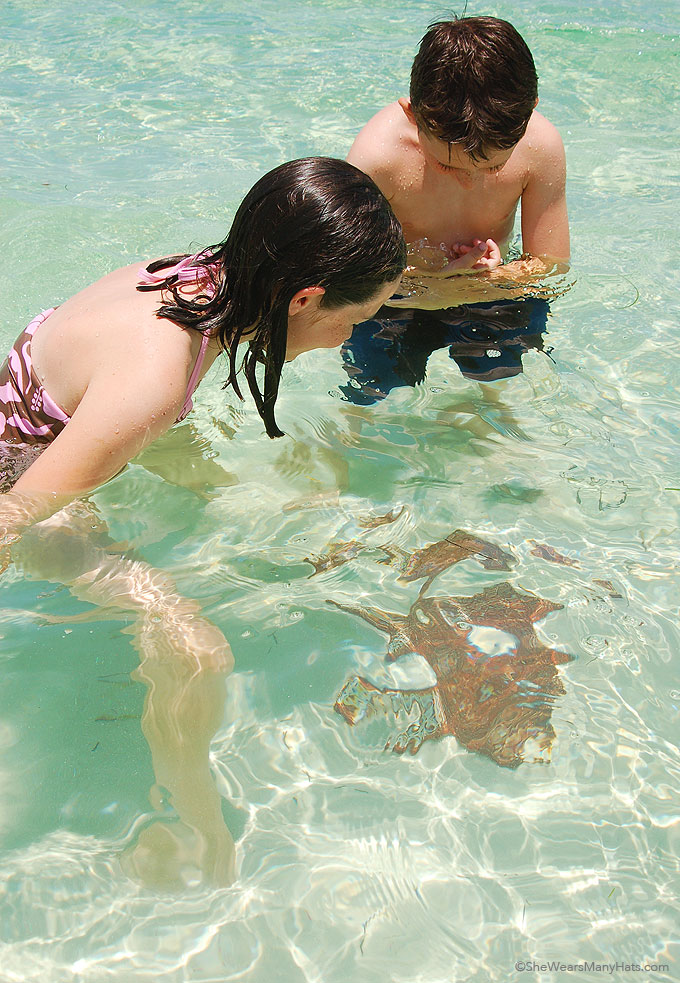 Eleuthera Bahamas snorkeling
