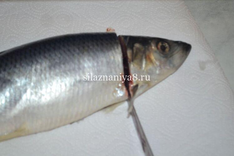 putulin ang ulo ng isang herring