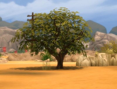 Liberated Desert Plants by plasticbox at Mod The Sims ...