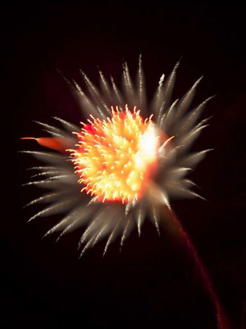 Fireworks That Looks Like Flowers Amp Flowers That Looks