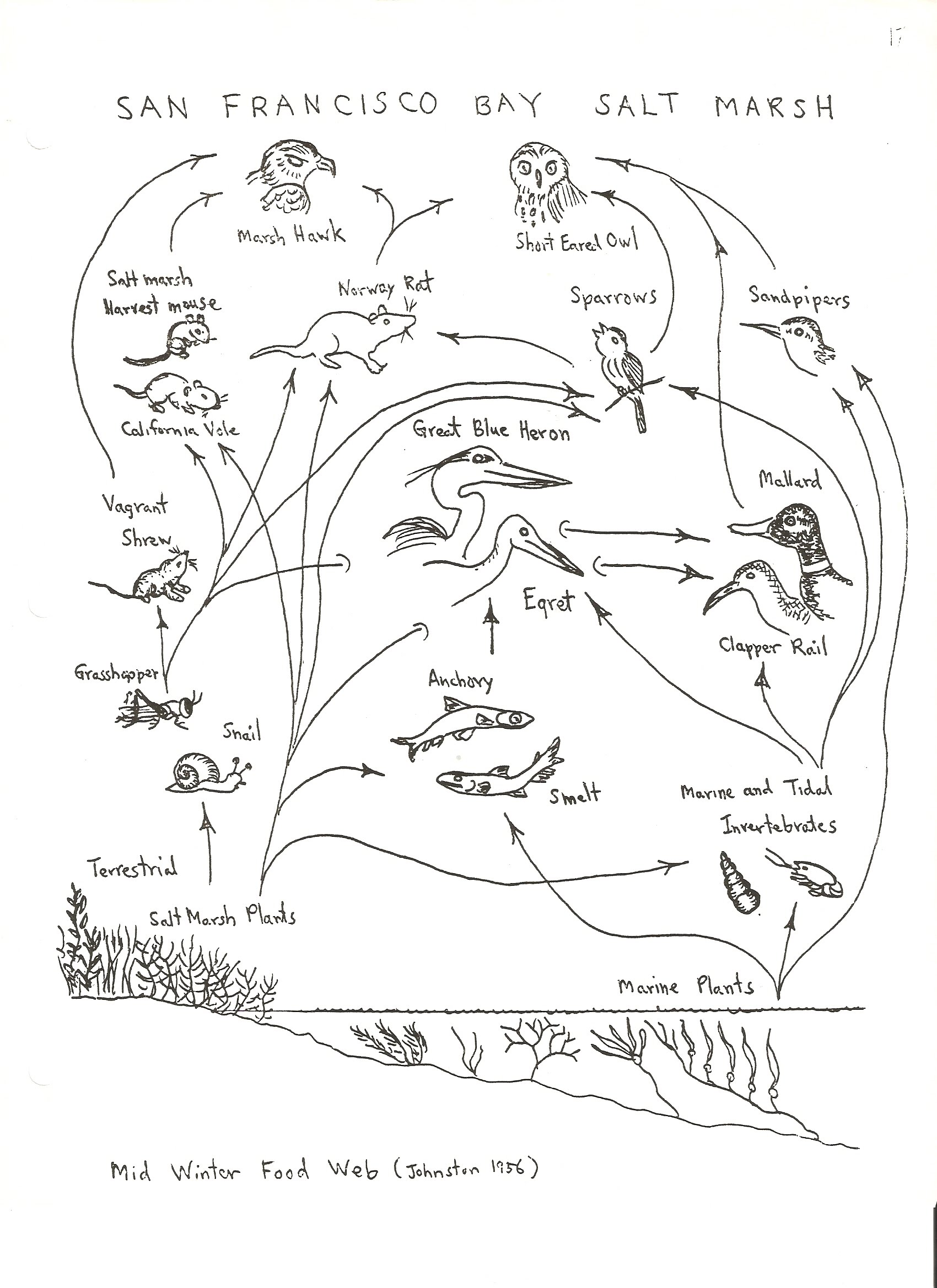 Worksheets Food Web Worksheets food chain and web worksheet free worksheets library download w ksheet high school ksheets libr ry downlo d