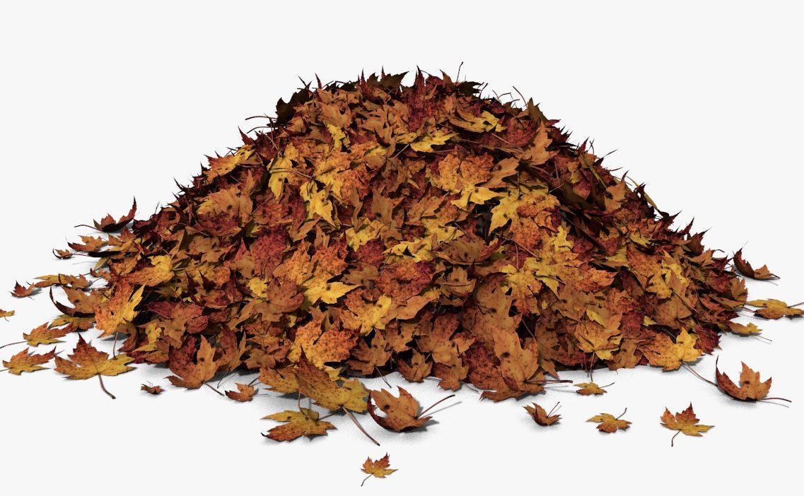 pile of leaves - 1137×702